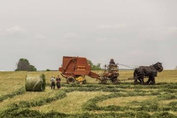Farmer na zaprzęgu konnym układający z dziećmi snopki siana