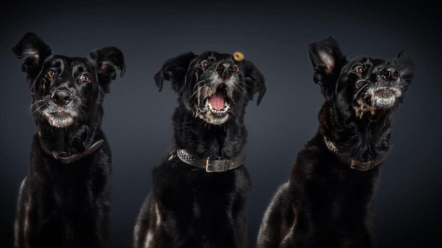 Pies w trakcie łapania przysmaku