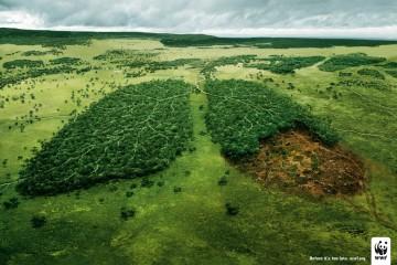 WWF Campaign